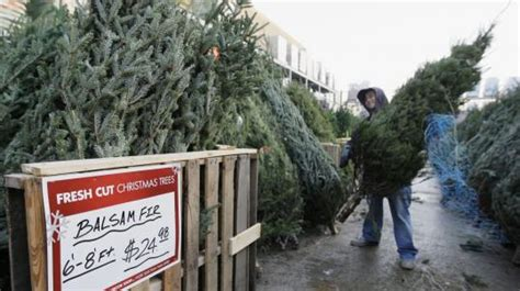 big chains seeing growth in tree sales the boston globe
