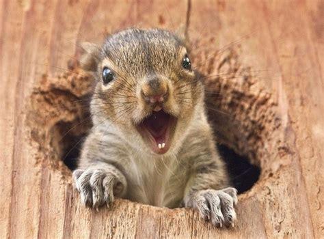 Baby Bunnies In Backyard 4 Unbelievable Squirrel House Designs