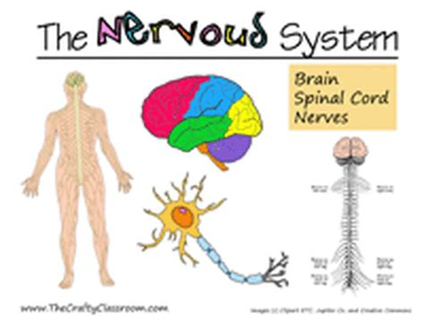 9 Things About That Get On My Nerves by Facts The Nervous System