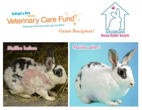 house rabbit society grant recipient georgia house rabbit society 187 adoptapet com blog