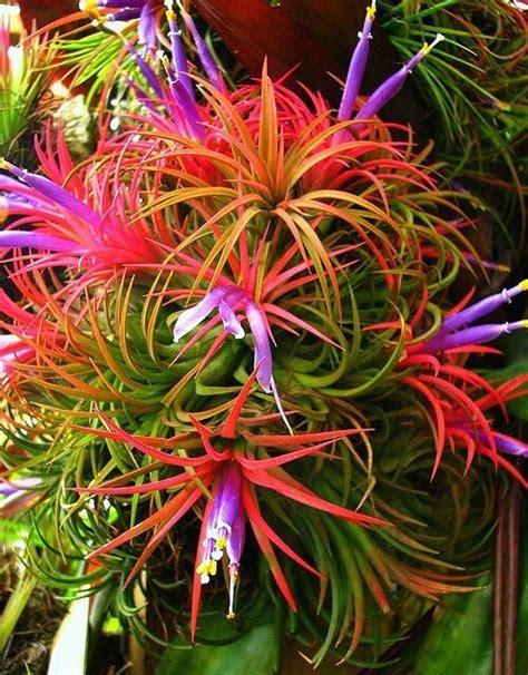 Bäume Pflanzen Jahreszeit 4007 by 475 Besten Blumen B 228 Ume Gartenanlagen Bilder Auf