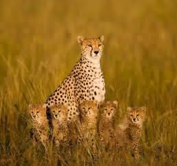 foto le le 22 foto di famiglia pi 249 mondo animale 9 22