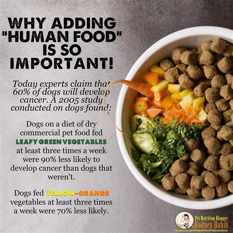 cancer diet for dogs can human food stop cancer in dogs the effect
