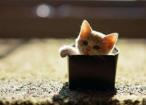 arredamenti gatto le posizioni strane dei gatti foto tempo libero pourfemme