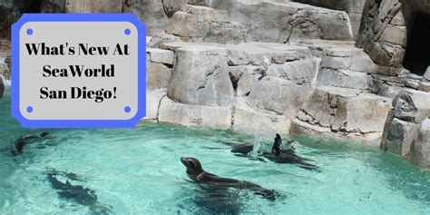 Hunting Trip Giveaways 2017 - experience the new orca encounter at seaworld giveaway socal field trips