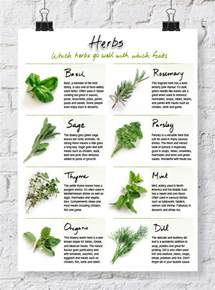 herb grower s sheet list of herbs and their uses in cooking archives dabbles