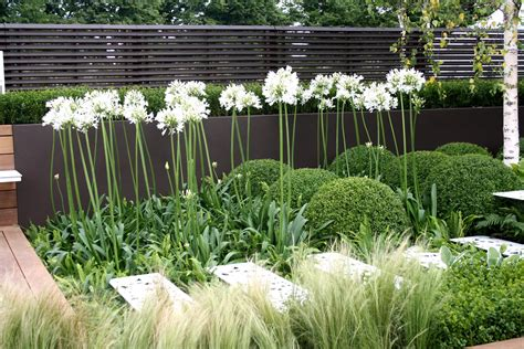 White Garden Flowers Allium Buxus And Stipa Tenuissima Garden Buxus Topiaries And Buxus Sempervirens