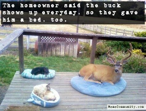 deer meme pet deer memecommunity