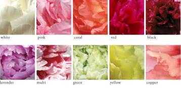 colors of peonies peony care tree herbaceous intersectional