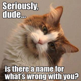 Caturday Meme - funny cat pictures