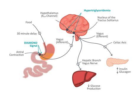 for the brain psychobiotics probiotics for the brain supplements in
