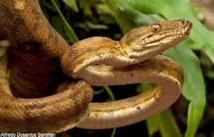 Dominant Plants In Tropical Rainforest - amazon rainforest reptiles photos amp info thinkjungle com