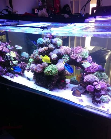 design reef aquarium 277 best saltwater tank images on pinterest fish tanks