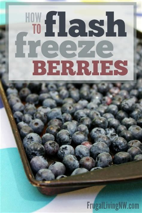 how to flash freeze berries frugal living nw