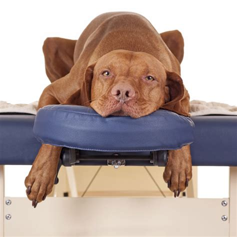 natural healing touch therapies  animals animals
