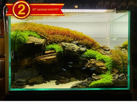 aquascape competition act aquascape contest 2017