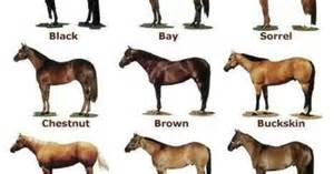 sorrel color american quarter color chart equestrian