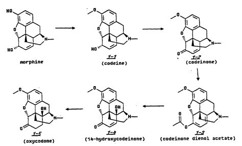 Hydrocodone Sysnthesis by Patent Ep1000065b1 Preparation Of Oxymorphone Oxycodone