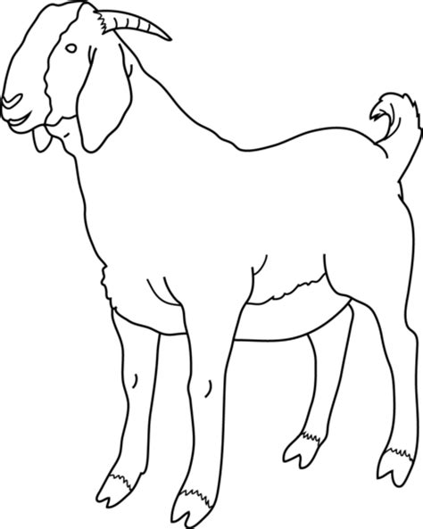 boer goat coloring page goat coloring page free clip art