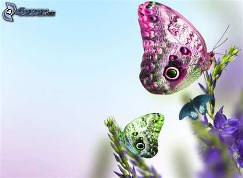 immagini sui fiori farfalle sui fiori