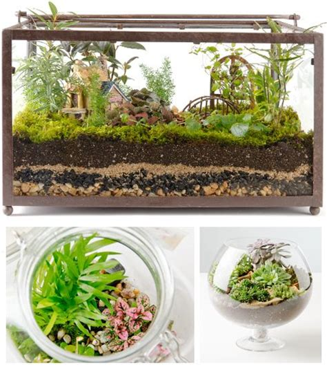 tank terrarium but my question can i make a terrarium i can eat ok not eat but with