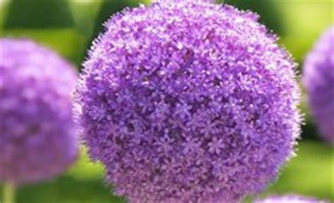 fiori riccione giardini d autore a riccione