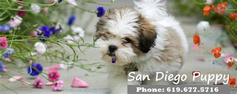 san diego puppies san diego puppy puppies for sale dogs for sale cheap puppies for sale