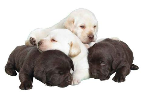 moving puppy pet advice puppy advice information