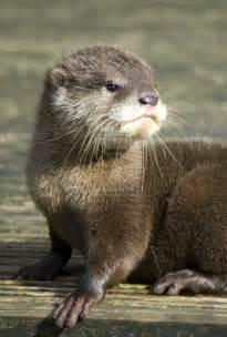 Elegant Pocket Wedding Invitations Baby River Otter Home