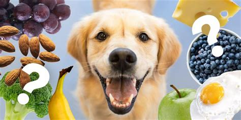 can dogs eat persimmons which foods can dogs consume