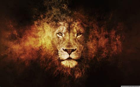 lion desk vs wise agent lion wallpapers wallpaper cave