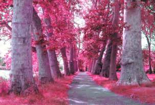colored tree pink color images pink trees wallpaper and background