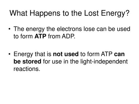 What Provides Electrons For The Light Reactions by What Provides Electrons For The Light Reactions Solar