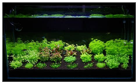 december 2010 aquascape of the month quot invitro scaping