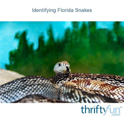 identifying florida snakes thriftyfun