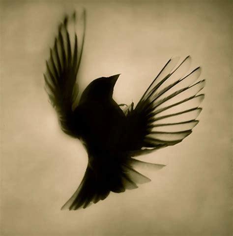 black sparrow tattoo black sparrow flying design