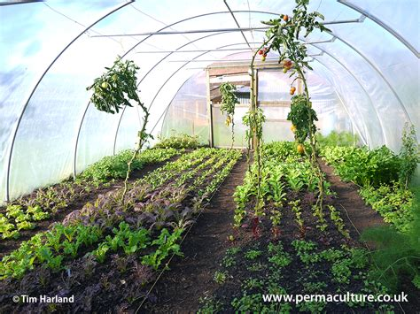 buying  polytunnel permaculture