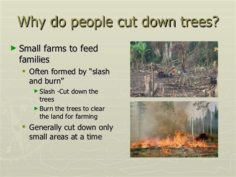 why do we cut trees 28 images planting trees why do
