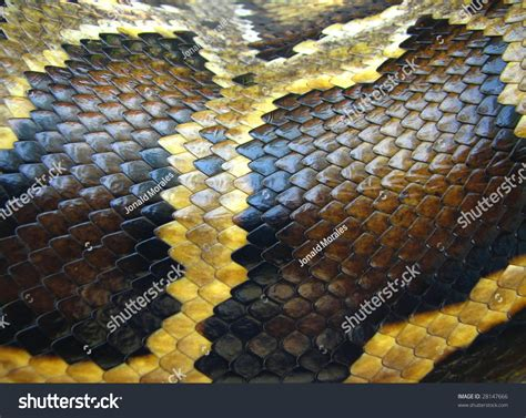 with snake scales stock image image of human design 31920181 python snake skin scales pattern macro stock photo 28147666