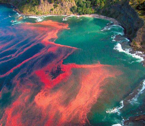 Imagenes De Mareas Rojas   mareas rojas y proliferaciones fitoplanct 243 nicas son