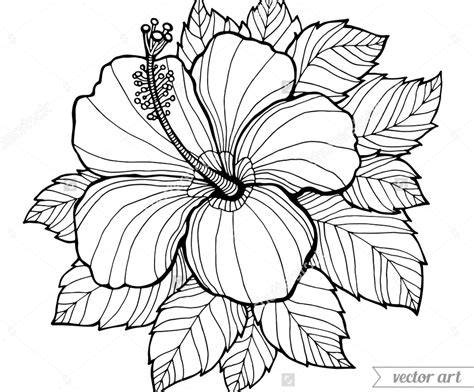 coloring pictures of hibiscus flowers hibiscus flower coloring pages download and printout page