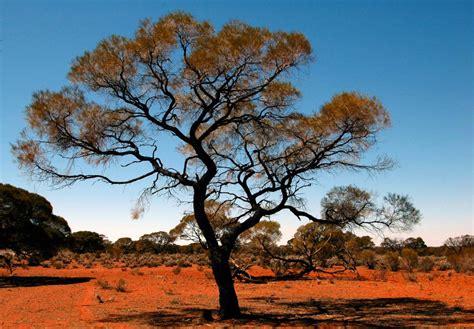on safari in south australia buckettripper