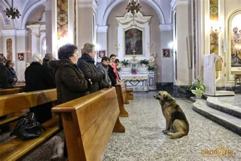 loyal attends mass every day at church where owner s
