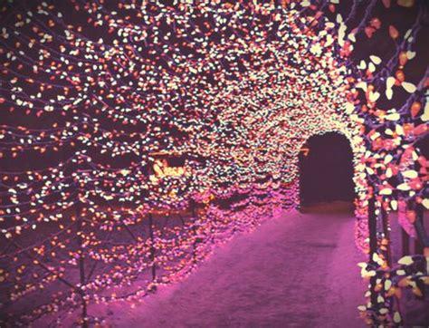 pink christmas lights pink christmas pinterest