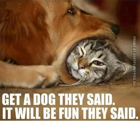 Cat Story do you a cats and dogs story catster