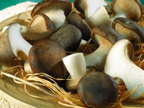 www cucinare meglio it vermicelli ai funghi ricetta