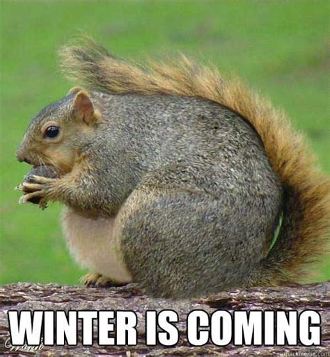Memes About Winter - the 50 funniest winter memes of all time gallery