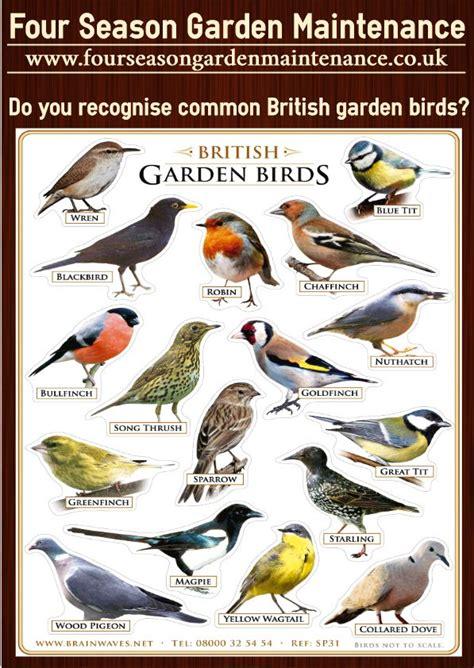 common british garden birds teach  children