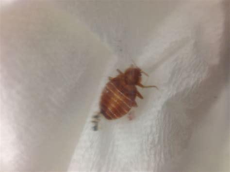 Carpet Beetles In Bathroom   Carpet Vidalondon