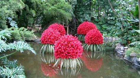 imagenes de flores acuaticas arte y jardiner 205 a plantas acu 225 ticas en dise 241 o de jardines